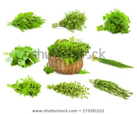 świeże oregano herb odizolowany biały Zdjęcia stock © Taiga