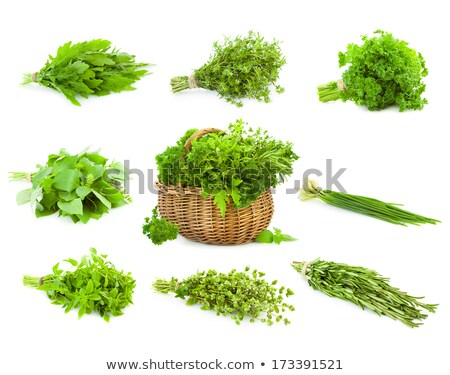 Bunch Of Fresh Oregano Herb Majoram Isolated Photo stock © Taiga