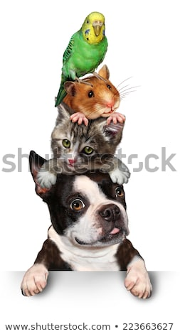 Pet group Sign Vertical Stock photo © Lightsource