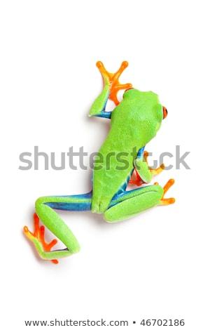kurbağa · hareketli · doğa · yeşil · hayvan · çevre - stok fotoğraf © alptraum