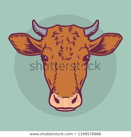 grande · vaca · campo · grama · verde · flores - foto stock © franky242