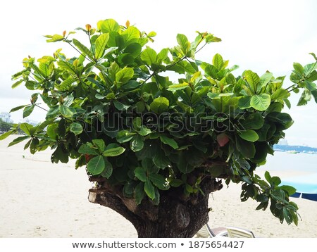 New fresh spring green leaves growing in a hedge. Stock photo © latent