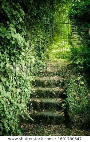 Overgrown Stone Staircase Stock photo © rhamm