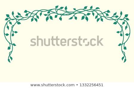 винограда границе иллюстрация различный Стили Сток-фото © lenm