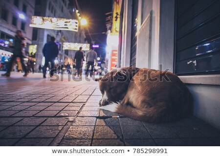 Stock photo: Brown and White Dog on the Street