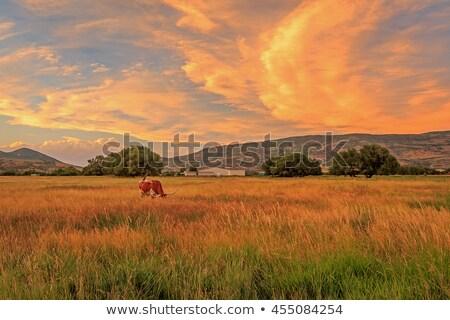 Boerderij landelijk Utah landbouw zomer gebouwen Stockfoto © emattil