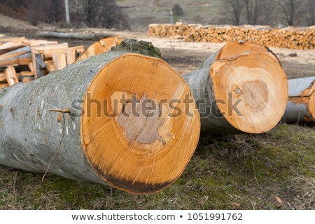 cutted firewood with blured background Stock photo © gewoldi