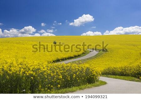 フィールド · 青空 · 空 · 雲 · 草 - ストックフォト © tilo