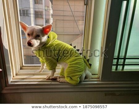 Pigro cane uno Foto d'archivio © fatalsweets