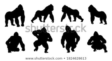 Goril siluet vektör görüntü yalıtılmış beyaz Stok fotoğraf © Istanbul2009