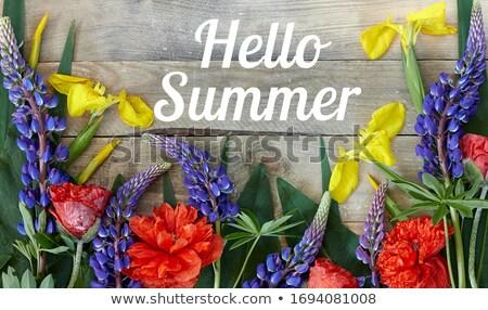 haşhaş · çiçek · bahar · bahçe · yeşil - stok fotoğraf © neirfy