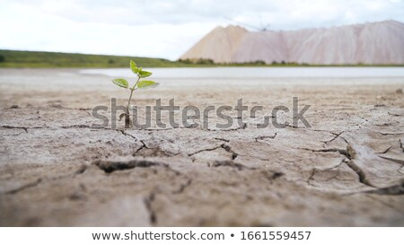 Soil drought and mud cracks in dry land Stock photo © stevanovicigor
