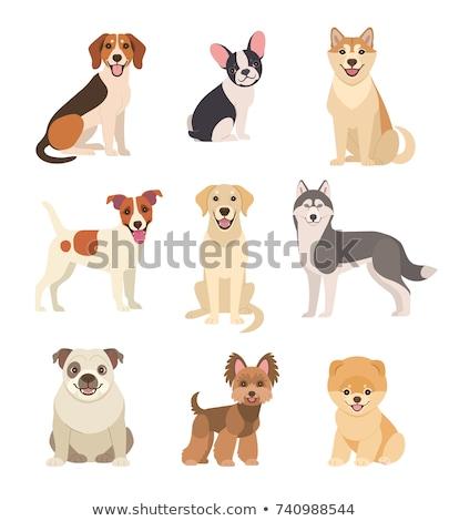 Cute dog. vector set  of Shiba in cartoon style. stock photo © natalya_zimina