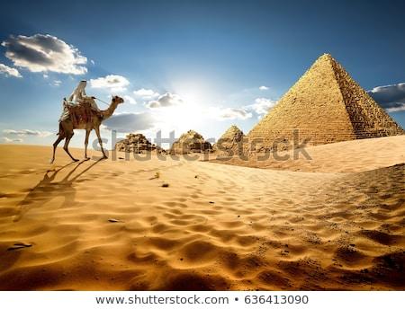 Teve Egyiptom illusztráció természet sivatag homok Stock fotó © adrenalina