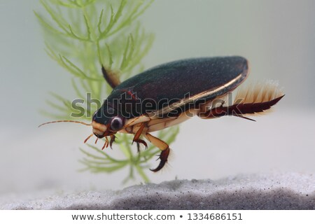 水 カブトムシ スケッチ 目 脚 黒 ストックフォト © bluering