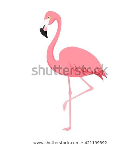 Rosa desenho animado vetor flamingo isolado branco Foto stock © adrian_n
