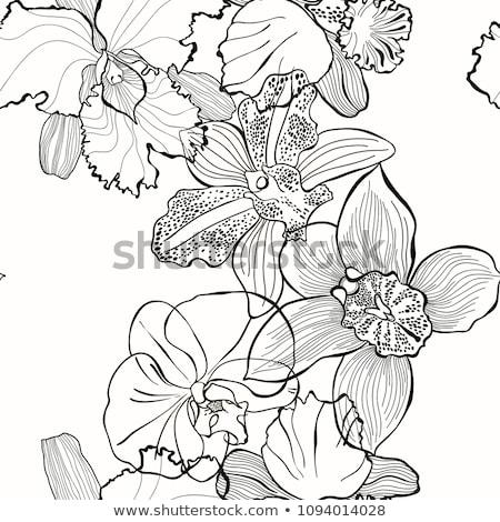 Contorno orquídea pintado preto branco projeto Foto stock © blackmoon979