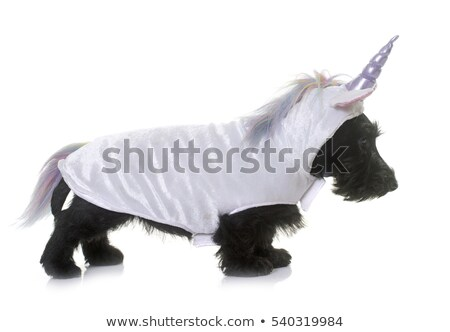 unicorn puppy scottish terrier stock photo © cynoclub