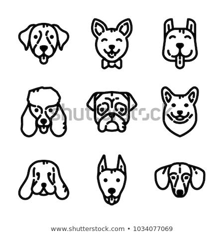 tacskó · kutya · ikon · szürke · mosoly · háttér - stock fotó © angelp