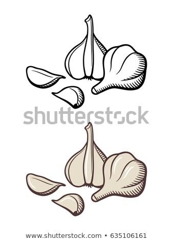 Garlic, bulb, slice, food, drawing, fruit, vector, line stock photo © JenesesImre