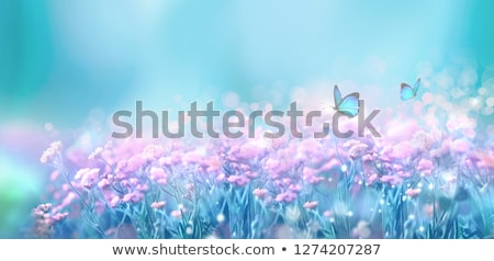 spring landscape with butterfly stock photo © adamson