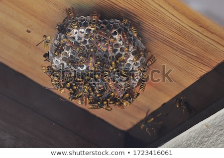 empty wasp cell Stock photo © fogen