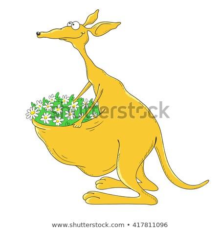 happy kangaroo on white background stock photo © bluering