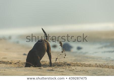 Aranyos állatok játszik tengerparti homok boldog macska nyár Stock fotó © aminmario11