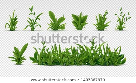 Grass Borders Set, Green Tufts vector Stock photo © Andrei_