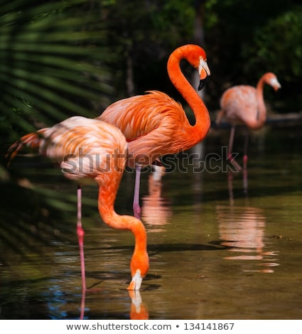 Many wild animals in the pond Stock photo © bluering