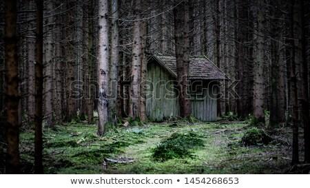 abandonado · cabine · mata · janela · edifício - foto stock © njnightsky