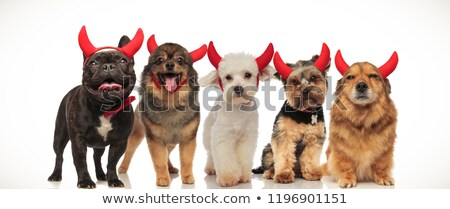 five little cute dogs wearing red devil horns for halloween Stock photo © feedough