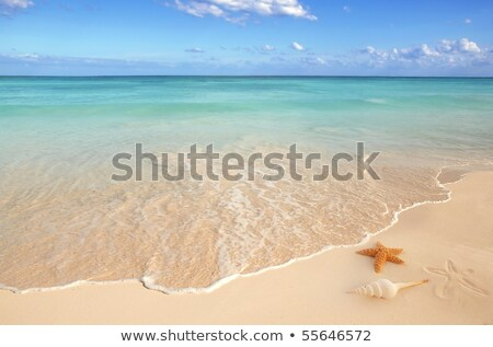 Caraïbes · starfish · tropicales · sable · turquoise · plage - photo stock © lunamarina