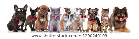 Cute команда девять элегантный домашние Сток-фото © feedough