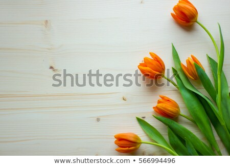 decorative pattern with gift envelopes of tulips flowers on an orange stock photo © artjazz