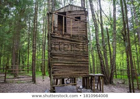 охота · башни · лес · природного · осень - Сток-фото © artush
