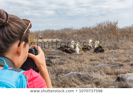 Galapagos tourist taking pictures of Waved Albatross on Espanola Island Stock photo © Maridav