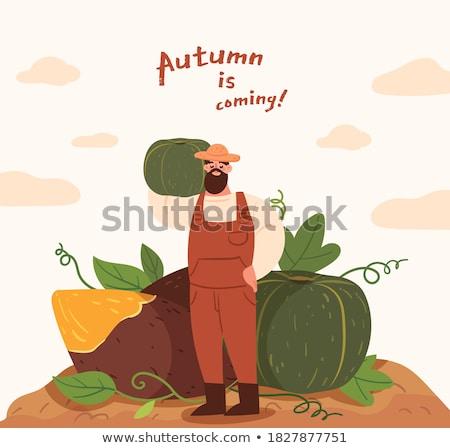 persona · piantagione · uomo · trasporto · zucche - foto d'archivio © robuart