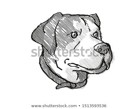 Berg hondenras cartoon retro tekening stijl Stockfoto © patrimonio