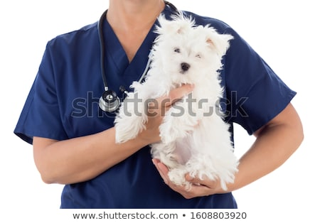 Female Veterinarian with Stethoscope Holding Young Maltese Puppy Stock photo © feverpitch
