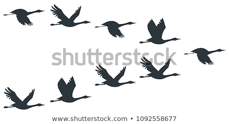 Silhouettes of flying cranes Stock photo © mayboro