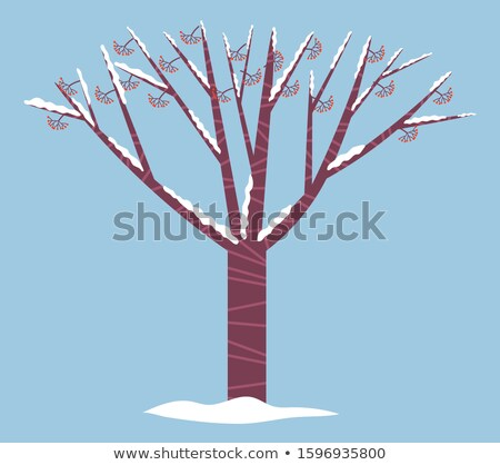 Guelder Rose or Holly Tree Covered by Snow, Winter Stock photo © robuart