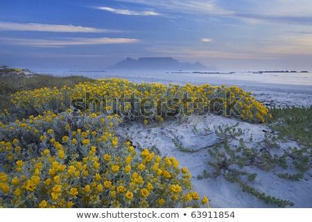 felső · asztal · hegy · tavasz · tájkép · Fokváros - stock fotó © searagen