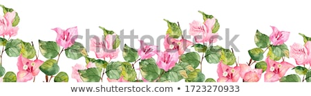 Bougainvillea flower Stock photo © Musat