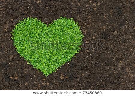 çim yeşil bitkiler büyüyen kalp şekli toprak Stok fotoğraf © Sarunyu_foto