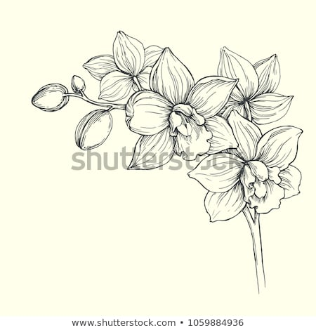 wine orchid Stock photo © yul30