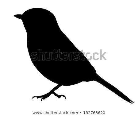 シルエット 売り言葉 背景 鳥 黒 自由 ストックフォト © perysty