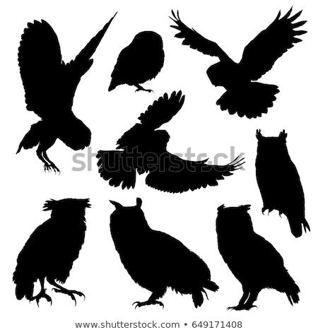 sziluett · bagoly · háttér · madár · fekete · szabadság - stock fotó © perysty