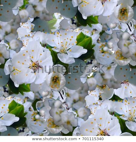 Virágzó almafa tavasz fotó természet alma Stock fotó © cherju