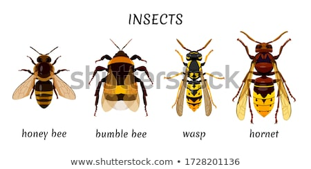 Bee wesp cartoon vector afbeelding handen Stockfoto © chromaco